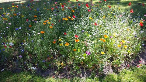 Blomstereng